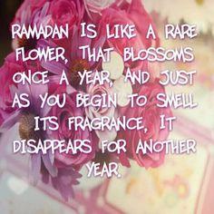 A rare flower....