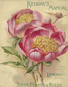 Antique Seed Packet