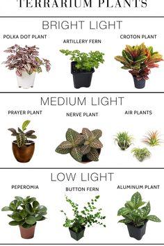 Indoor Garden, Garden Plants, Garden Beds, Easy House Plants, Decoration Plante, Inside Plants, Plants Are Friends, Terrarium Plants, Snake Plant