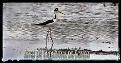 Laguna de Sonso - #Buga #ValledelCauca #Colombia Photo And Video, Signs, Animals, Buga, Colombia, Animales, Animaux, Shop Signs, Animal