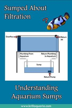 Confused by aquarium sump filtration? Read our article to discover the benefits … Confused by aquarium sump filtration? Read our article to discover the benefits of saltwater aquarium sumps and how they function towards a pristine aquatic system. Saltwater Aquarium Beginner, Saltwater Aquarium Setup, Aquarium Sump, Coral Reef Aquarium, Saltwater Fish Tanks, Diy Aquarium, Marine Aquarium, Aquarium Fish Tank, Aquarium Ideas