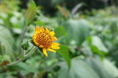 Produsen obat herbal diabetes - PT. Natura Alam Persada. Jakal Km 8,5 Jalan Damai Gang Sunan Muria No 68 Ngaglik, Sleman - Yogyakarta. CS - 081320069492