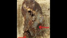 Astonishing Newborn Baby Elongated Skull Of Paracas Peru - YouTube
