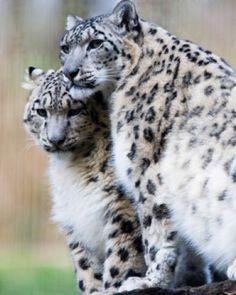 Resultado de imágenes de Google para http://www.bfotos.com/albums/animales-graciosos/animales-emparejados-foto.jpg