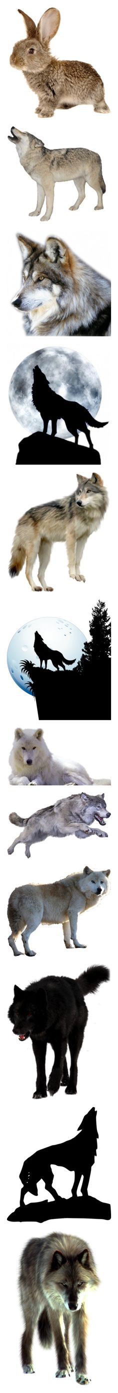 """""""Animals, birds, insects 3 (open)"""" by irnarenko ❤ liked on Polyvore featuring animals, easter, spring, backgrounds, filler, wolf, wolves, fillers, art and effect"""