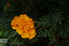 Tie a Yellow Ribbon by gbh06020 #nature