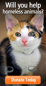 ASPCA Shelter Locator - Will you help homeless animals?