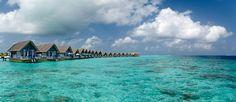 http://mundodeviagens.com/maldivas/ - A claridade e transparência que oferecem as águas das Maldivas possibilitam-lhe observar uma infinita parte da fauna marinha, nomeadamente as mantas-raias, as tartarugas, os crustáceos, os tubarões e milhares de peças coloridas. Neste post, é sobre a Flor das Índias - tal como Marco Polo chamou a este arquipélago - de que vamos falar.