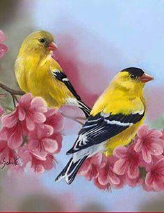 Toland Home Garden Goldfinch Blossoms Decorative Birds/Floral Garden Flag, by Pretty Birds, Beautiful Birds, Watercolor Bird, Watercolor Paintings, Goldfinch, Bird Drawings, Bird Pictures, Colorful Birds, Bird Art