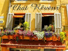 """Charming windowsill on the balcony of the shop Chat Reveur, Place de la Mairie, Aix-en-Provence, France. Note the saying on the awning fringe, in English, """"Happiness is in the eye of the beholder"""" - by PhotoScenic"""