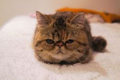 This cranky kitten loaf. | 31 Pictures That Will Make Your Life Significantly Better