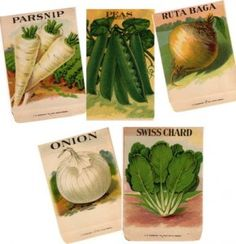 I've been a bit too busy to post in the past few days, but I thought I'd put up some great old images from seed packs that I have in my ephemera collection. Lettuce Seeds, Vintage Seed Packets, All Vegetables, Veggies, Tomato Seeds, Vintage Farm, Edible Garden, Vintage Labels, Flower Seeds