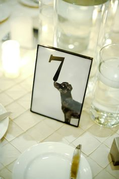 totally could take pictures of Gizmo with a table number! Brunch Wedding, Dog Wedding, Hotel Wedding, Wedding Blog, Wedding Events, Wedding Favors, Wedding Reception, Wedding Decorations, Wedding Ideas
