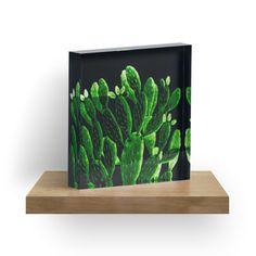 « cactus lumineux » par agnès trachet