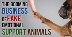 Emotional support animals are untrained companion animals that provide emotional support and comfort to someone with a disability such as anxiety or depression. http://healthypets.mercola.com/sites/healthypets/archive/2015/05/14/emotional-support-animal.aspx