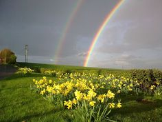 Beautiful Springtime Photos by Kenneth Mallard Daffodils and a rainbow Rainbow Promise, Rainbow Treats, Seasons In The Sun, Somewhere Over, Natural Phenomena, Gods Promises, Holiday Time, Over The Rainbow, Amazing Nature