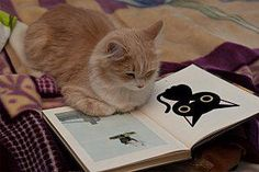Reading about cats...