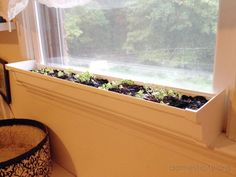 grow vegetables indoors over winter | indoor window boxes, indoor