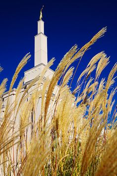 Albuquerque   #cricut Southwest inspiration