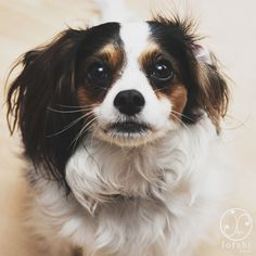 Click the Funny Dogs PIN to watch our amazing Funny Pet Videos and we would love you to follow our boards.  http://funnypetvideos.net
