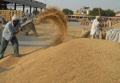 #Rice Re-#Processing, Rice #blending and repacking Solutions. http://nextechagrisolutions.com/services.html
