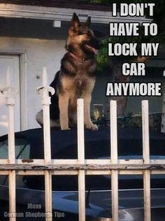 no reason at all #german #shepherd #dog