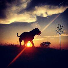 Instagram Photo - Follow us @Redbarn Pet Products by redbarninc on 500px