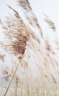 15 Ideas Flowers Wild Nature Grass For 2019 Flower Yellow, Wheat Fields, Wild Nature, Greek Gods, Gods And Goddesses, Simple Pleasures, Photos, Pictures, Scenery