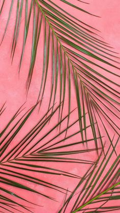 Background iphone for parallax. Plant Wallpaper, Iphone Background Wallpaper, Pastel Wallpaper, Aesthetic Iphone Wallpaper, Screen Wallpaper, Phone Backgrounds, Aesthetic Wallpapers, Iphone Wallpaper Tropical, Photo Wall Collage