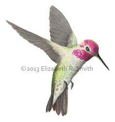 hummingbirds drawings in color - Pesquisa Google