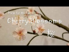 Creating a Cherry Blossom Out of Gumpaste (Part 1/2) - YouTube