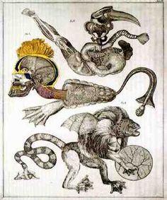 Natural History: Tab. 10; etching/aquatint by Jan Švankmajer.