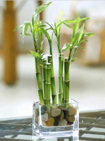 1000 Images About Desk Plant On Pinterest Tin Cans Toilet Paper Rolls And Bamboo Ideas