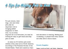 """Read this article in our FREE digital edition! """"4 Tips for Helping Pets in Need""""  https://issuu.com/publishinparadise/docs/parpetskw0417-digital"""