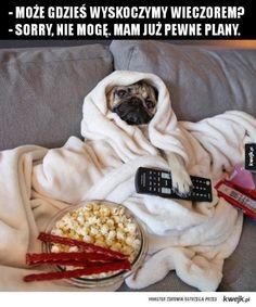Sorry, jestem zajęty