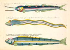 Natural Histories: 500 Years of Rare Scientific Illustrations from the American Museum of Natural History Archives | Brain Pickings