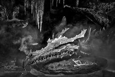 Dragon by Ptigui via http://ift.tt/2hg53K7