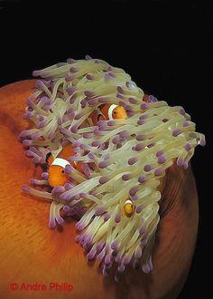 I love those sea anemones ...