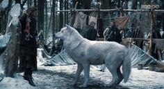 Game of Thrones Wolves | Game of Thrones Dire Wolves » Ghost dire wolf Game of Thrones