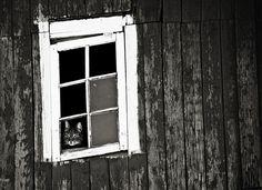 何となく切ない……飼い主の帰りを窓辺で待つネコの写真30枚 - DNA