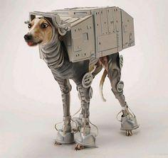 Animaux Star Wars. Source photo : Bestweekever. Ça a du prendre du temps pour l'habiller. Et s'il a besoin de se gratter ou autre chose, il fait comment ?