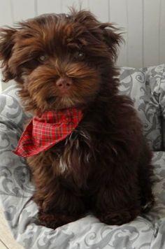 Top 5 Dog Breeds That Enjoy Cuddling The Most
