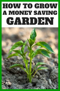 When you have limited space in your garden, you've got a tough decision on your hands. What gets a spot in that coveted outdoor real estate? Why not choose some plants that can save you money! Herbs are one of the most practical and cost-efficient plants to grow at home. Lettuce is another great option, allowing you to throw together a salad with just as many leaves as you need that night, saving the rest of the plant for later. Visit eBay for more tips on what to grow that can save you…