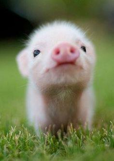 was für ein süßes Tier!,
