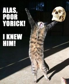 1000+ images about Shakespeare on Pinterest | William shakespeare ...  Animal Shakespeare Memes