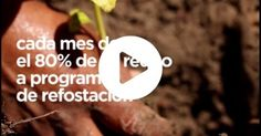 Ecosia,+un+buscador+de+Internet+que+planta+árboles