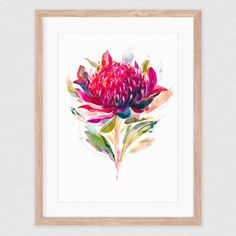 Australian native flora art prints by Natalie Martin, featuring her vibrant watercolour artworks. Limited edition, archival quality prints on beautiful textured paper. Watercolor Artwork, Watercolor Flowers, Watercolor Ideas, Australian Native Flowers, Australian Wildflowers, Australian Bush, Flor Protea, Waratah Flower, Natalie Martin