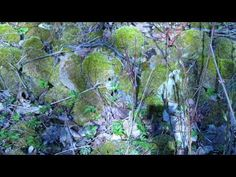 Ingo Valgma: Ettevaatust! Surface Mining, Limestone Quarry, Spotted Woodpecker, Great Tit, Water Images, Animal Tracks, Water Quality, Viper, Waterfall