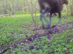 Rajakaamera / Trail camera | www.flickr.com/groups/trailgame… | Flickr Trail Camera, Image