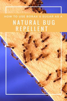 How to Use Borax And Sugar As A Natural Bug Repellent